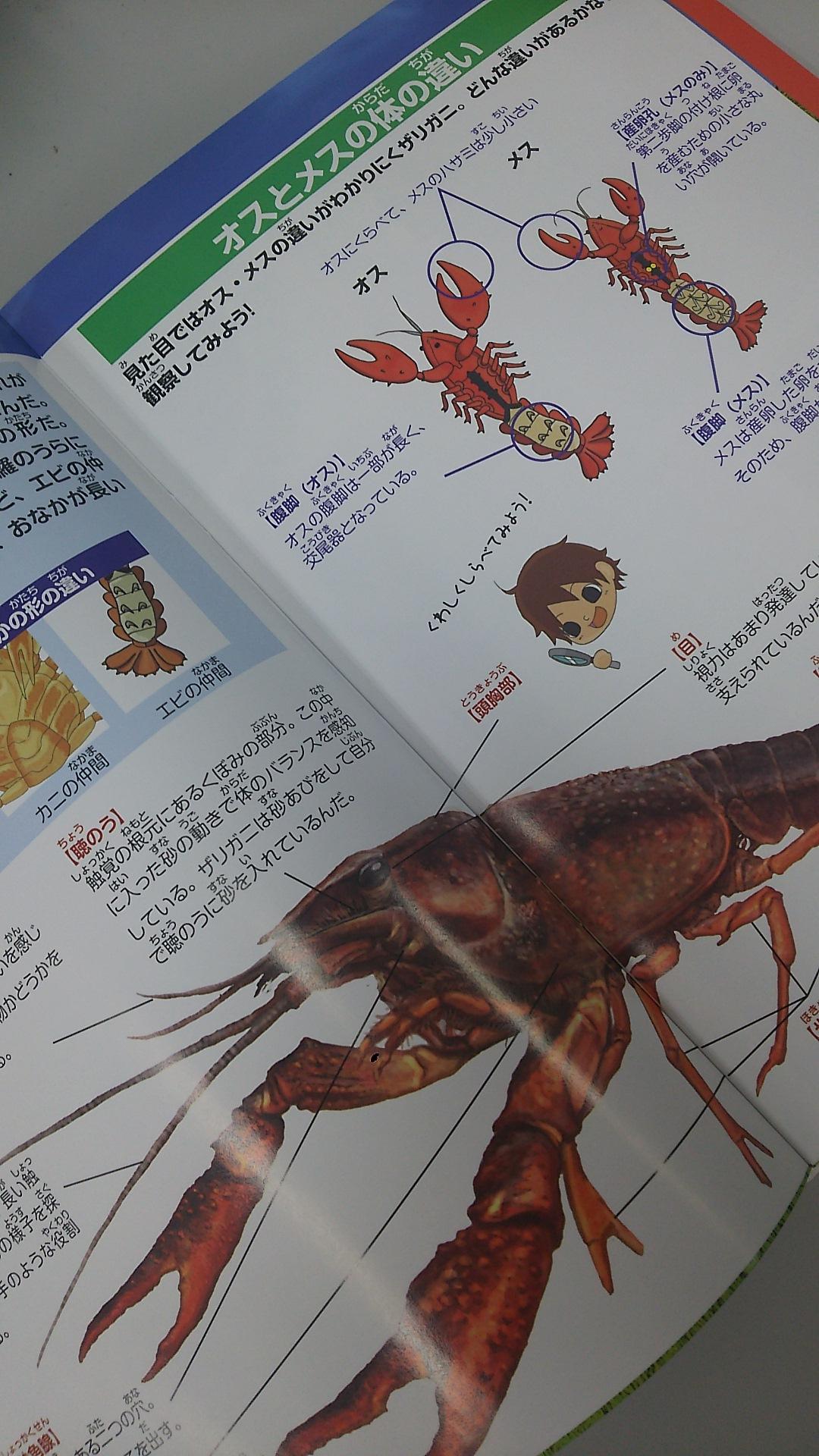 ザリガニ図鑑でザリガニのことを研究しよう